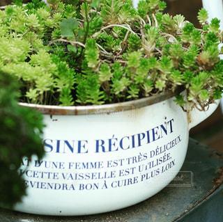 鉢の中の緑の植物の写真・画像素材[2328089]