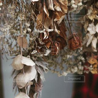 花のクローズアップの写真・画像素材[2431854]