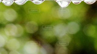 自然の写真・画像素材[2619452]