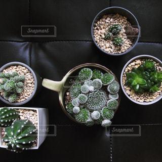 植物の写真・画像素材[2619458]