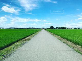 青空に続く道の写真・画像素材[1281241]