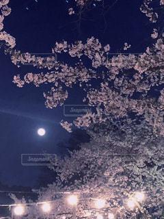 夜桜の写真・画像素材[1259506]