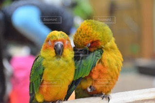 鳥の写真・画像素材[46271]