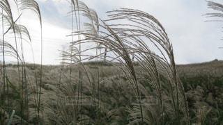草に覆われた畑の植物の写真・画像素材[2511337]