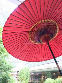 和傘の写真・画像素材[1261473]