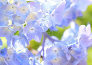 花の写真・画像素材[1260404]