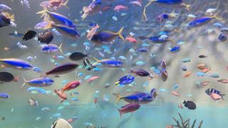 水族館の魚たちの写真・画像素材[1812820]