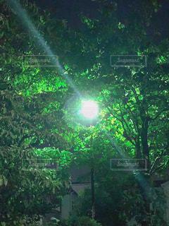 夜の散歩道の写真・画像素材[1262530]
