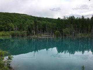 木々 に囲まれた水の体 - No.1260263
