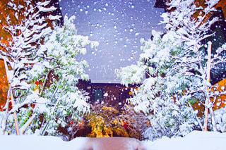 雪の写真・画像素材[1260419]