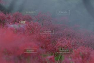 ❇︎ Sleeping forestの写真・画像素材[1542301]