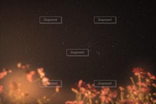 Cosmoの写真・画像素材[2432075]