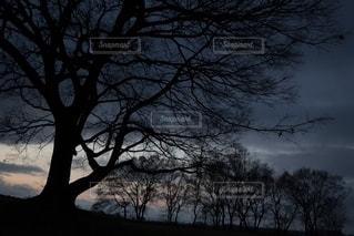 Big treeの写真・画像素材[2784037]