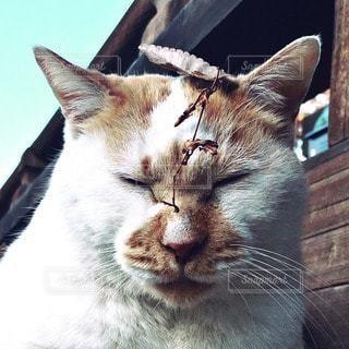 猫三昧の写真・画像素材[12847]