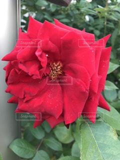 近くの花のアップの写真・画像素材[1261424]