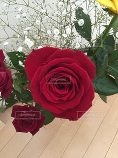 赤い薔薇の写真・画像素材[1261565]