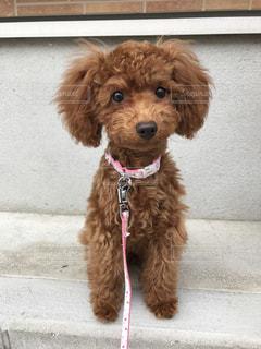 建物の前に座っている茶色の犬の写真・画像素材[1262151]