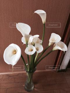 カラーの花の写真・画像素材[1267892]