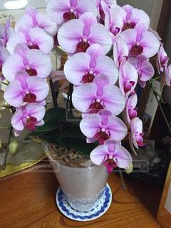 蘭の花の写真・画像素材[1267899]