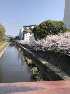 川と桜並木の写真・画像素材[1277922]