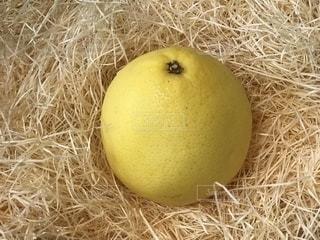 グレープフルーツの写真・画像素材[1282517]
