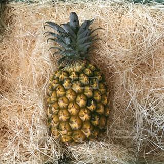 パイナップルの写真・画像素材[1282521]