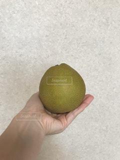 梨の写真・画像素材[1282522]