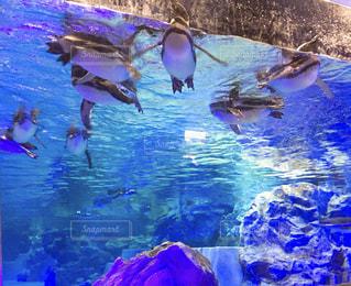 すみだ水族館のペンギンの写真・画像素材[1276832]