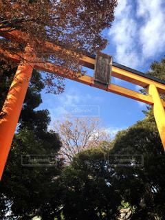 川越氷川神社の写真・画像素材[1756817]