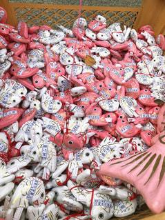川越氷川神社の、あい鯛おみくじの写真・画像素材[1756820]