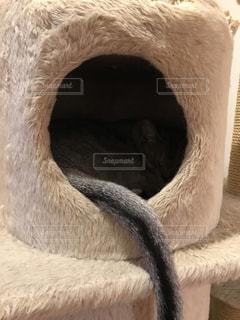 猫のしっぽの写真・画像素材[1757718]