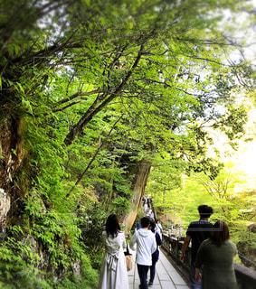榛名神社の中を歩く、トレンチコートの女性の写真・画像素材[1765343]