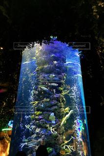 舞浜のレストランの水槽の写真・画像素材[1783289]