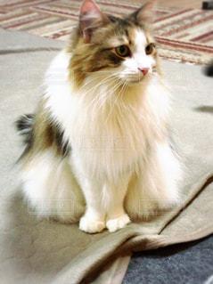 猫カフェの猫の写真・画像素材[1783306]