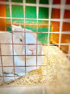 ウサギの写真・画像素材[1845288]