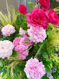 ローズガーデンの薔薇の写真・画像素材[2133724]