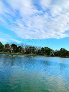 浮間公園の池と鳥の写真・画像素材[2940277]