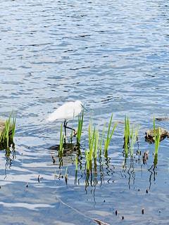 公園の水鳥の写真・画像素材[3086216]