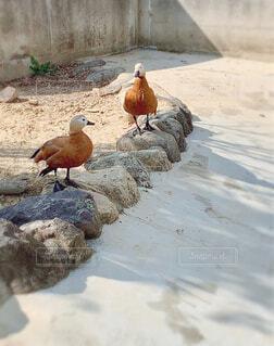 サファリパークの鳥の写真・画像素材[4261021]