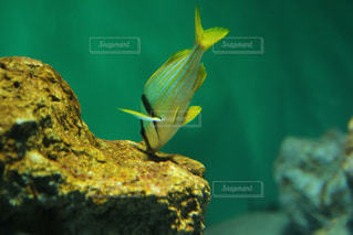 水族館の写真・画像素材[1262682]