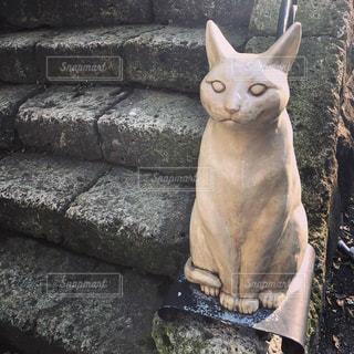 岩の上に座っている猫の写真・画像素材[1262309]