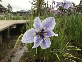 近くの花のアップの写真・画像素材[1262471]