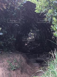 トトロがいる森の入り口のような入口の写真・画像素材[1263438]