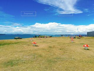 ニュージーランド 北島 デボンポート きのこの写真・画像素材[1263067]
