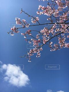 空を飛んでいる鳥の群れの写真・画像素材[1272875]