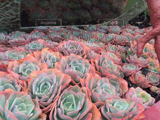 色とりどりの花のグループの写真・画像素材[1272904]