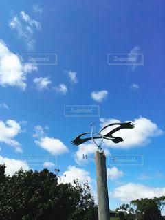 空を飛んでいる鳥の写真・画像素材[1274396]