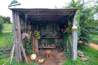 裏庭の木と家の写真・画像素材[1303210]