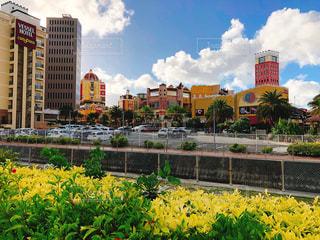 市では、黄色の花の写真・画像素材[1312422]