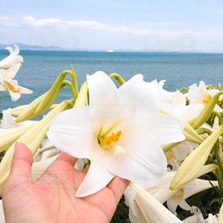 近くの花のアップの写真・画像素材[1360818]